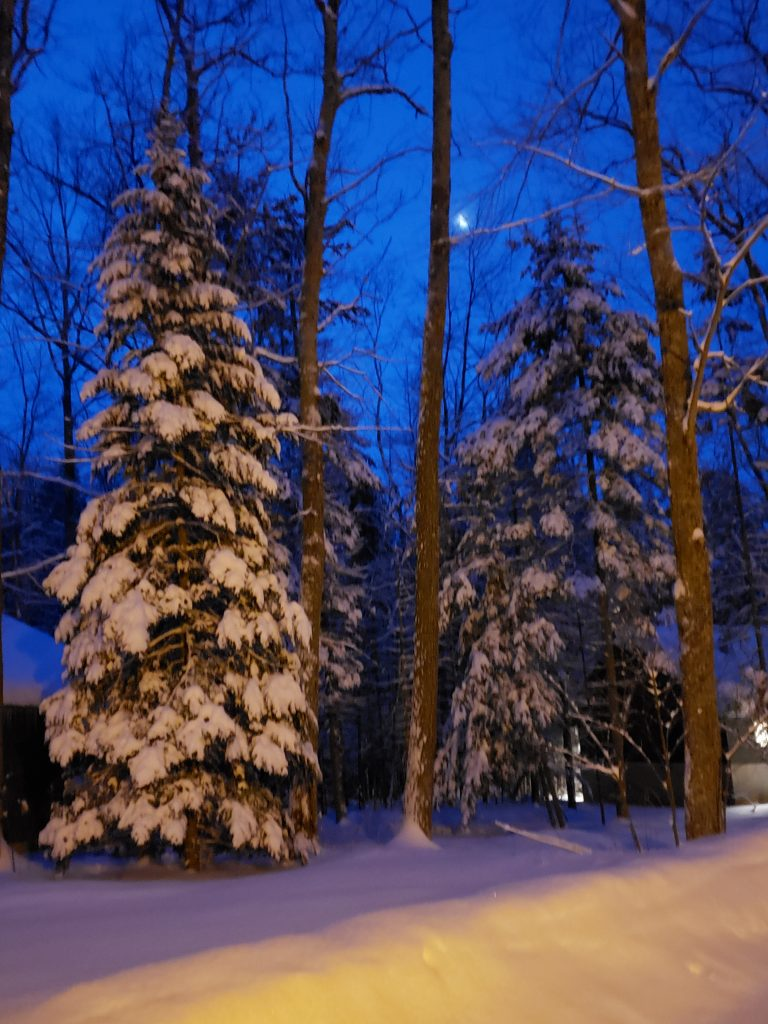 Tall, snow-covered pine trees with slit of a moon in background