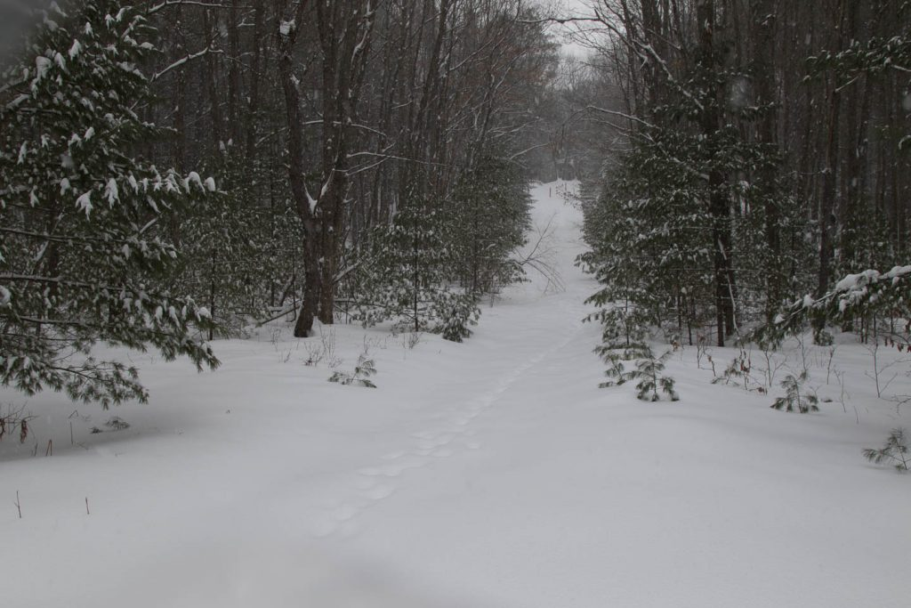 Ungroomed trail through woods